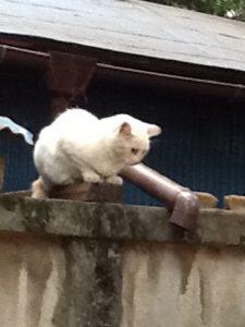 猫,猫用レボリューション,猫背,猫フィラリア,白猫