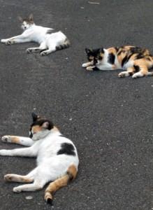 2015-08-15 17.42.08 三匹の猫、ひなたぼっこ猫