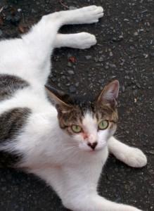 2015-08-18 18.08.32 猫がじっと見てる