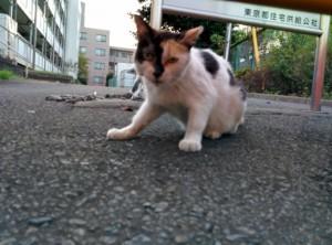 2015-08-18 18.08.50 猫にレボリューション