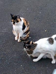 猫が3匹いる