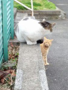 猫トイレ空きましたよ