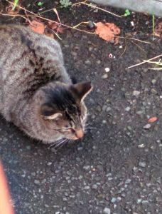 猫の写真野良猫