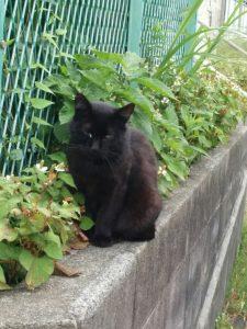 近所の黒さん