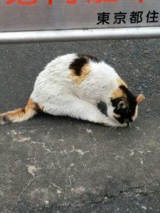 野良猫母さんグルーミング_20160630_171437