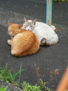 まあるくなって猫2匹がかわいい