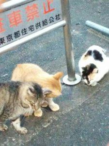 体を擦り付け合う猫