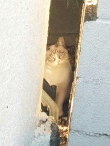 可愛い猫の写真を撮って