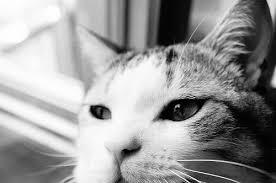 猫の関節炎