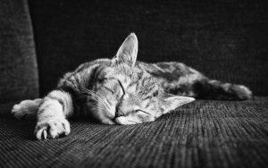 猫の関節炎の話