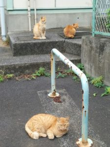 野良猫の家族