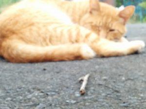 片目をつむった猫