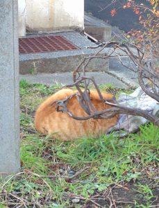 ゴミの横で寝ている茶トラ猫の姿