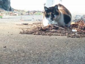しゃがんでいる猫