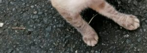 猫ちゃんの足