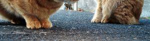 二匹の猫の足