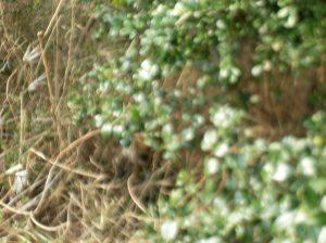 野鳥の観察場