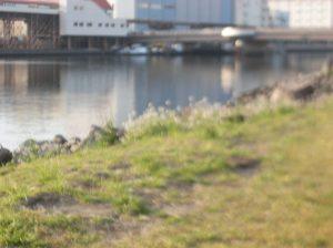 大井ふ頭運河