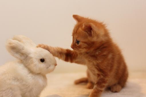 子猫とうさぎ