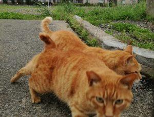 野良猫チャトラ
