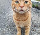野良猫茶トラ正面写真